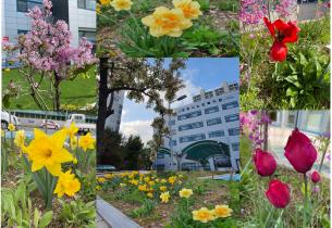 [2021.04.13] 군포시노인복지관 꽃밭에 찾아온 봄